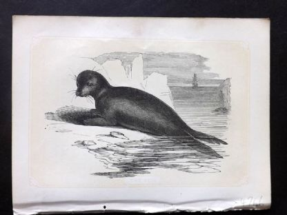 Bicknell 1851 Antique Print. The Seal